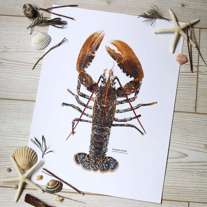 European Lobster Print