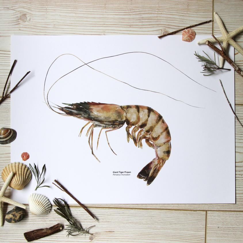 Giant Tiger Prawn Print