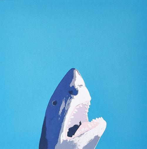 North Laine Shark - Coastal Card