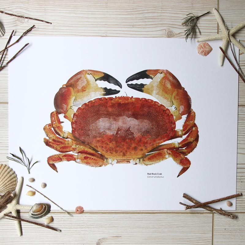 Red Rock Crab Print