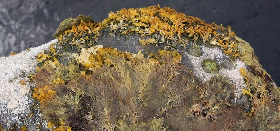Sea Life Department - image of seaweed covered rock